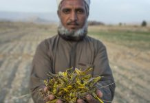 Saadullah Zehri, a farmer who lost his crops to locusts. | Photographer: Asim Hafeez | Bloomberg