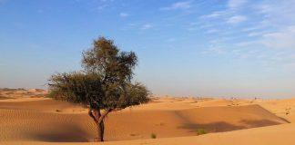 Representational image   A desert in Abu Dhabi   Pexels